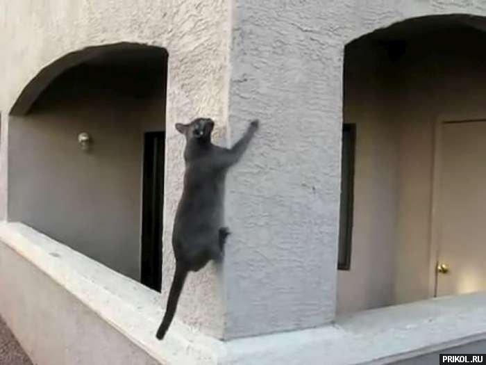 spidercat-02