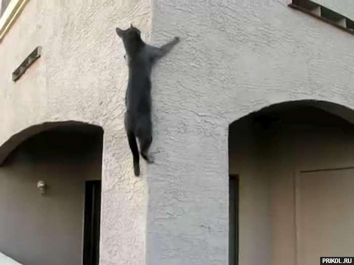 spidercat-03