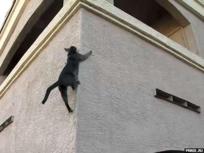 spidercat-04