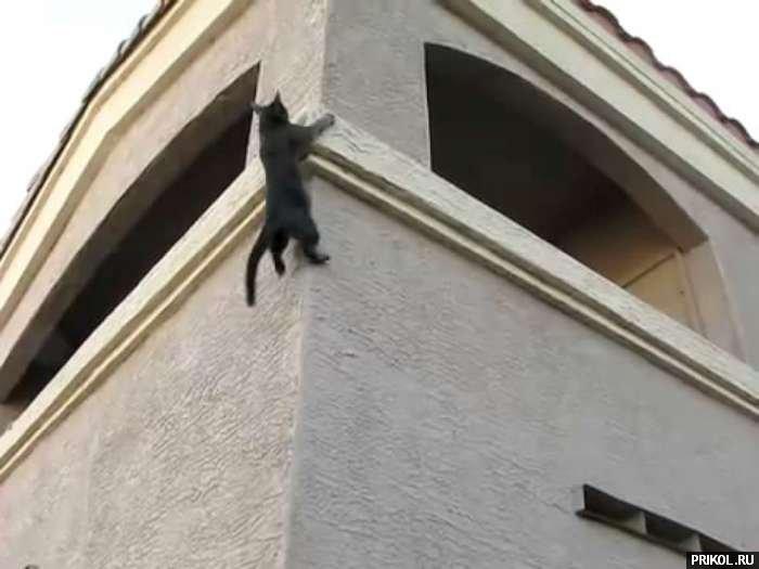 spidercat-05