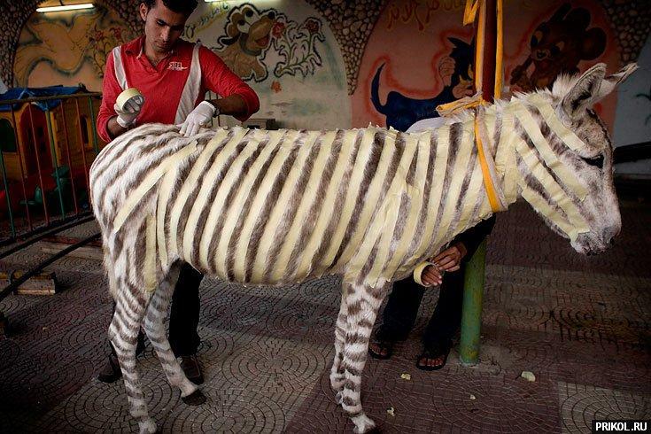 zebra-paint-01