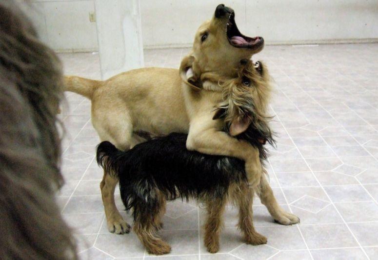 Забавные животные и птицы. - Страница 6 Dogs-dogs-81