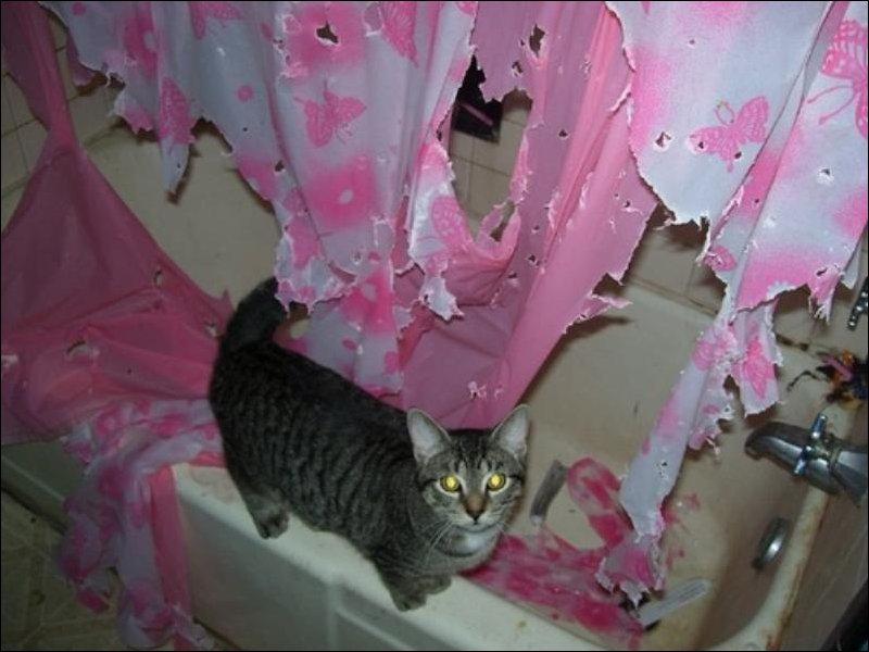 Кошка в ванной комнате
