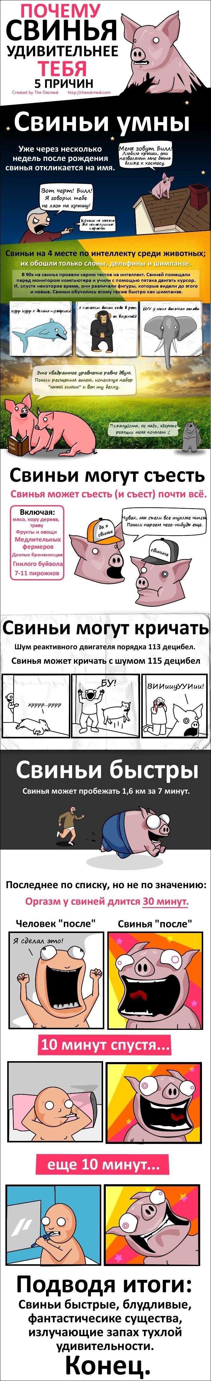 Удивительные свиньи