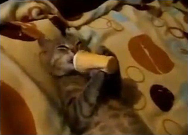 Кот есть мороженое