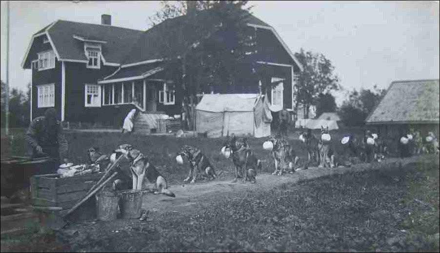 Пограничные собаки в очереди на обед. Финляндия 1940