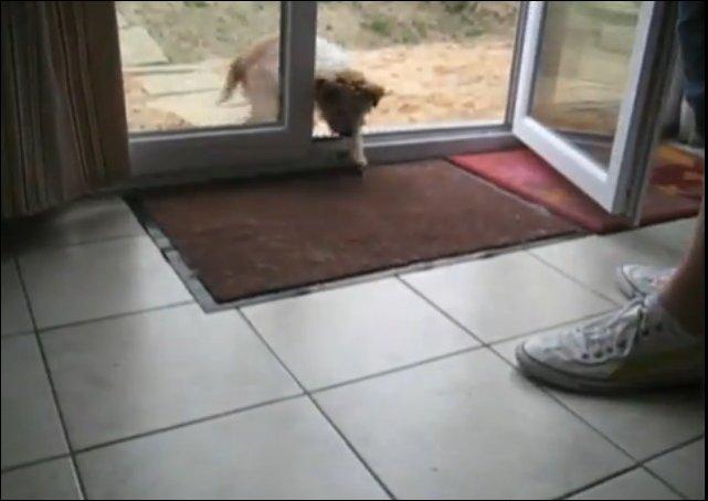 Собачка вытирает лапы войдя в дом