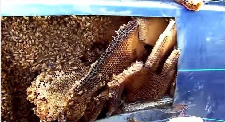 Пчелы устроили улей внутри машины