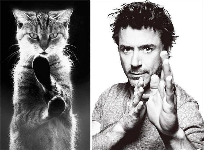 Коты похожие на людей