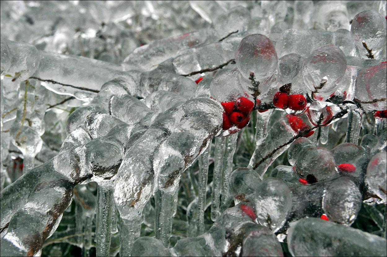 приготовления блюда ледяной дождь картинки все