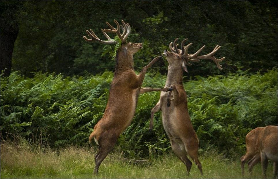 Танцы в лесу
