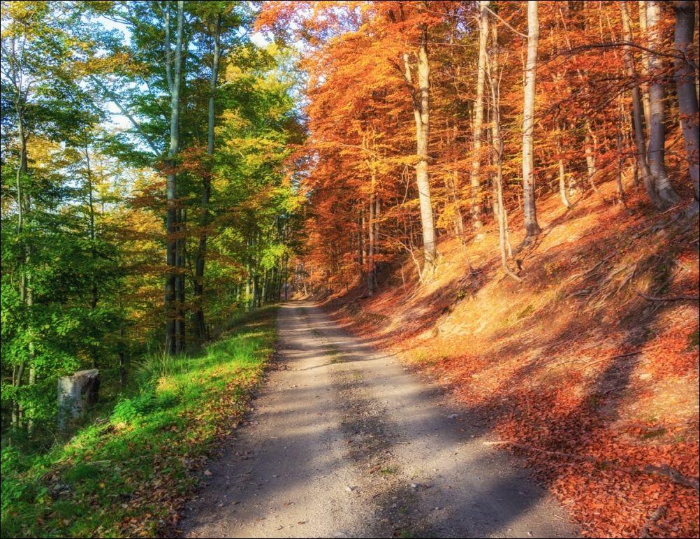 Картинки на лето как осень