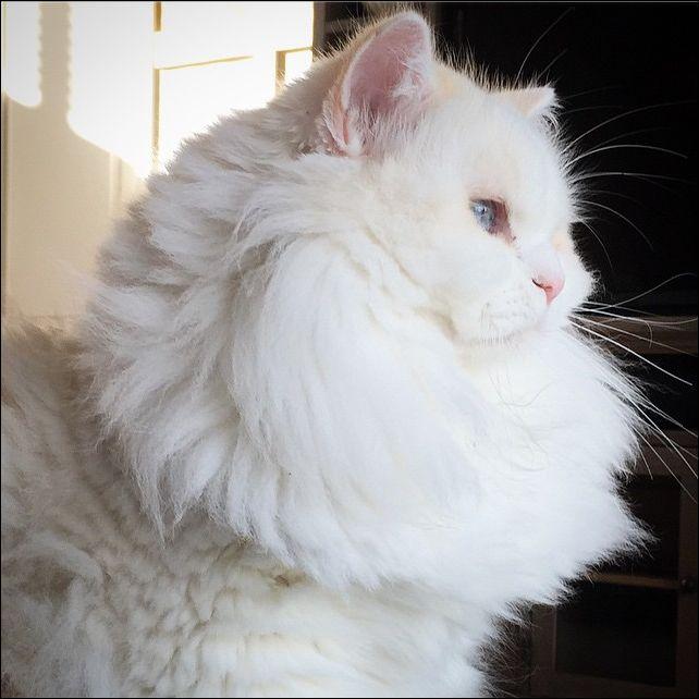 Преображение кота
