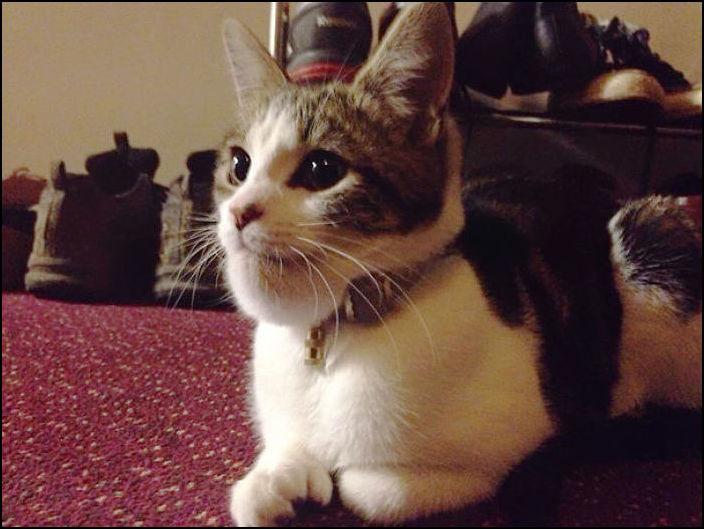 Коты покусанные пчелами