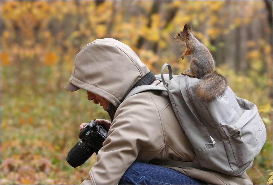 Прикольные картинки с животными про работу