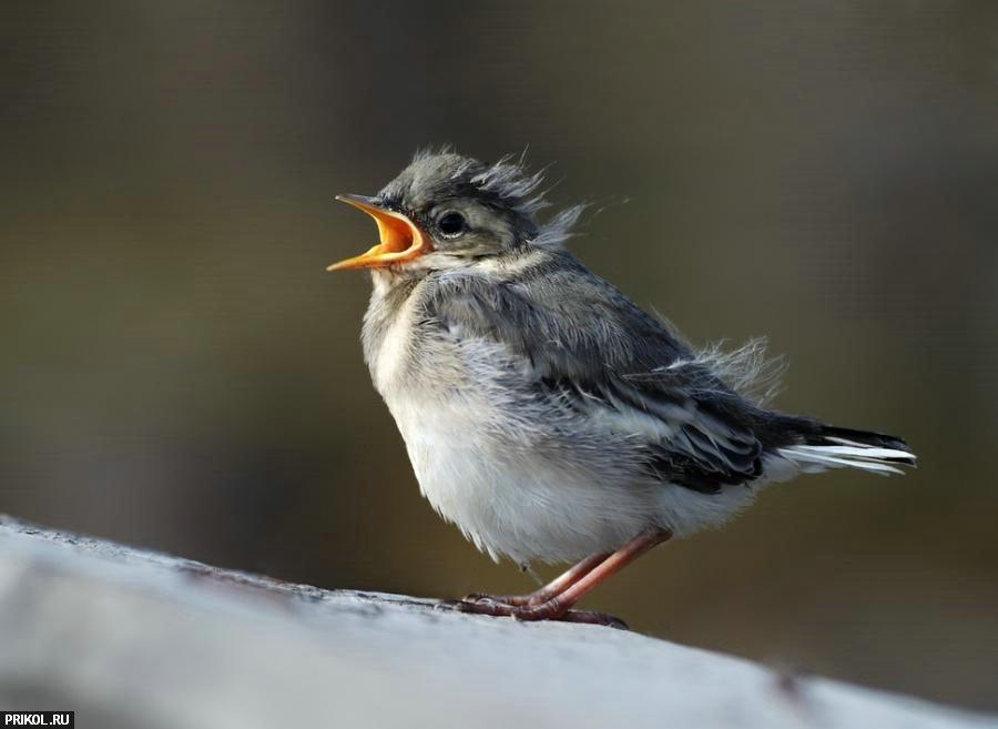 Птички 56 фото