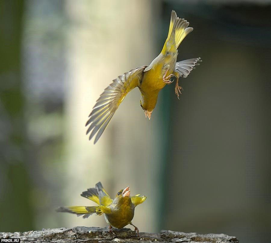 birds-25