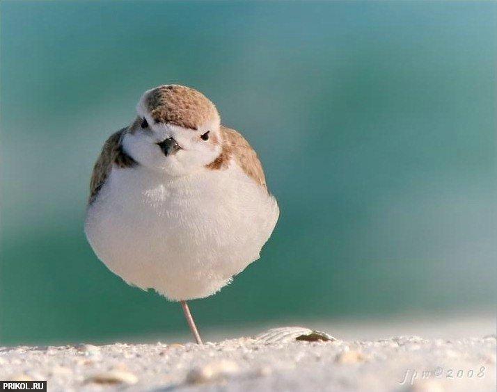 birds-42