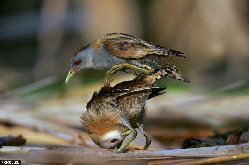 birds-43