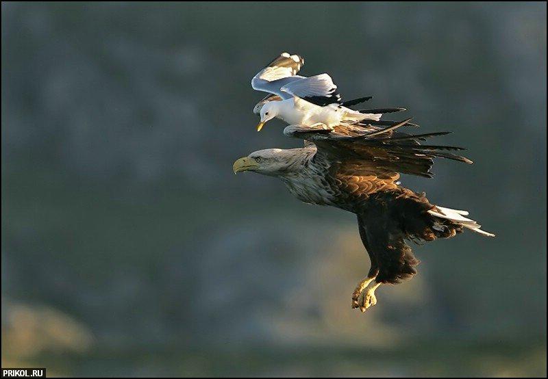 birds-47