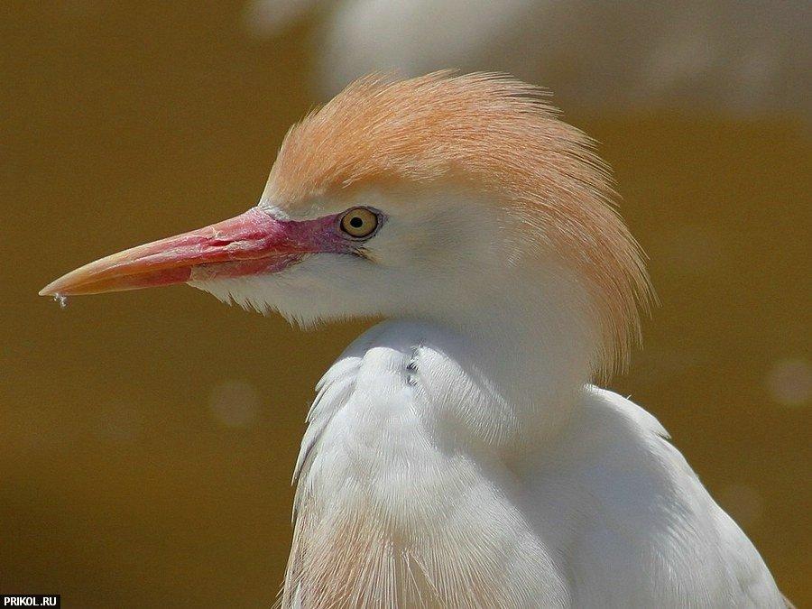 birds-50