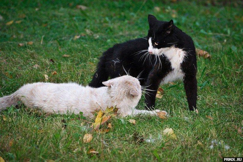 электропоезд везет дерущиеся коты фото номера