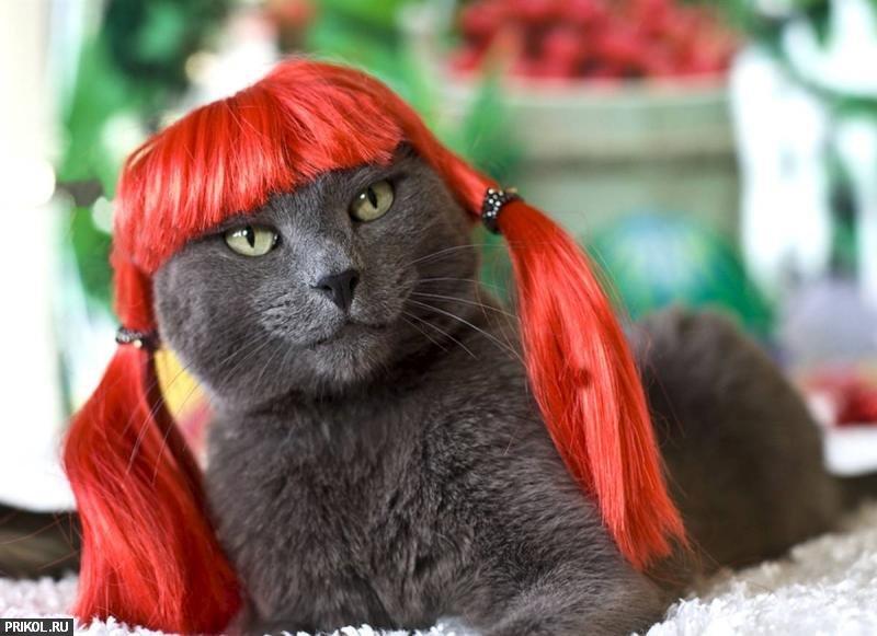 cat-glamour-01