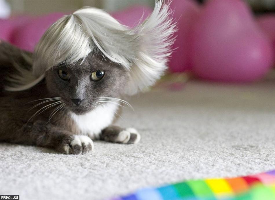 cat-glamour-04
