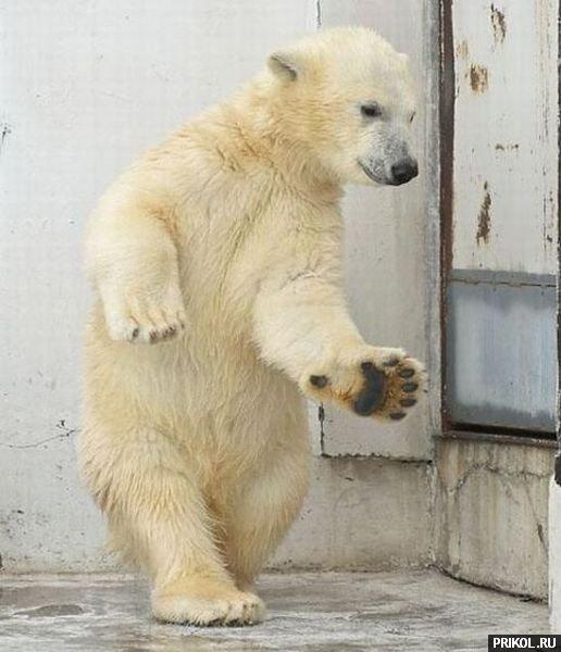 dancing-bear-01
