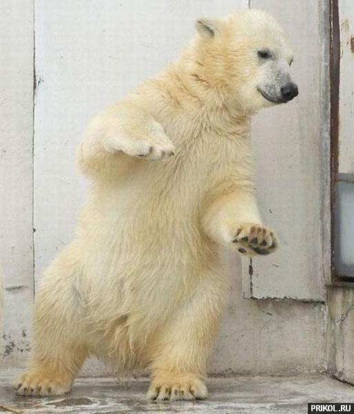 dancing-bear-02