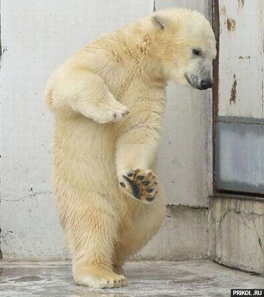 dancing-bear-03