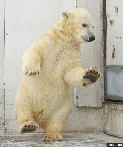 dancing-bear-04