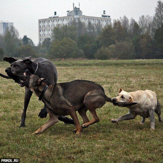 dog-battle-01