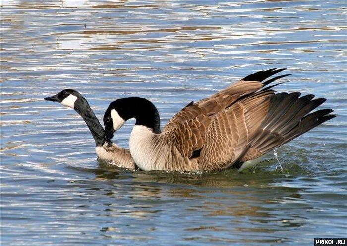 duck-diving-01