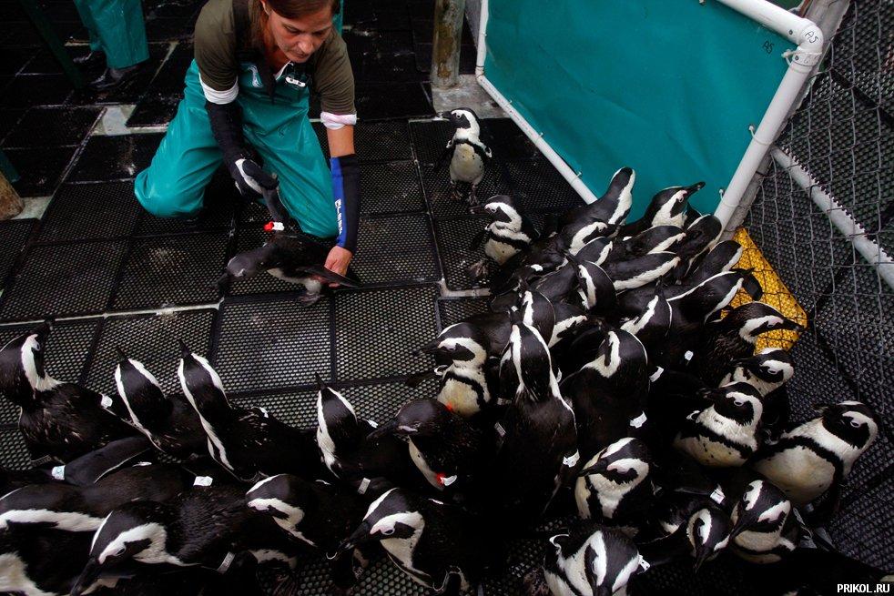 penguins-03
