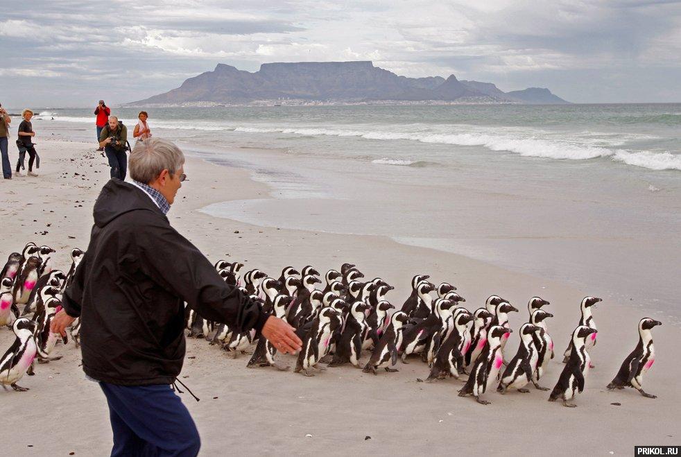 penguins-05
