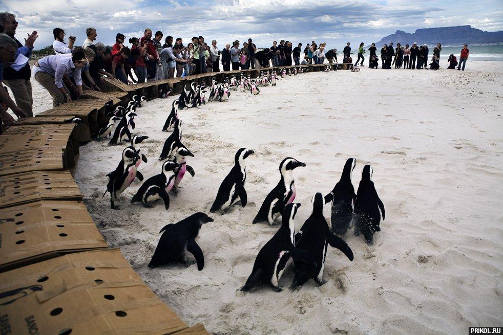 penguins-06