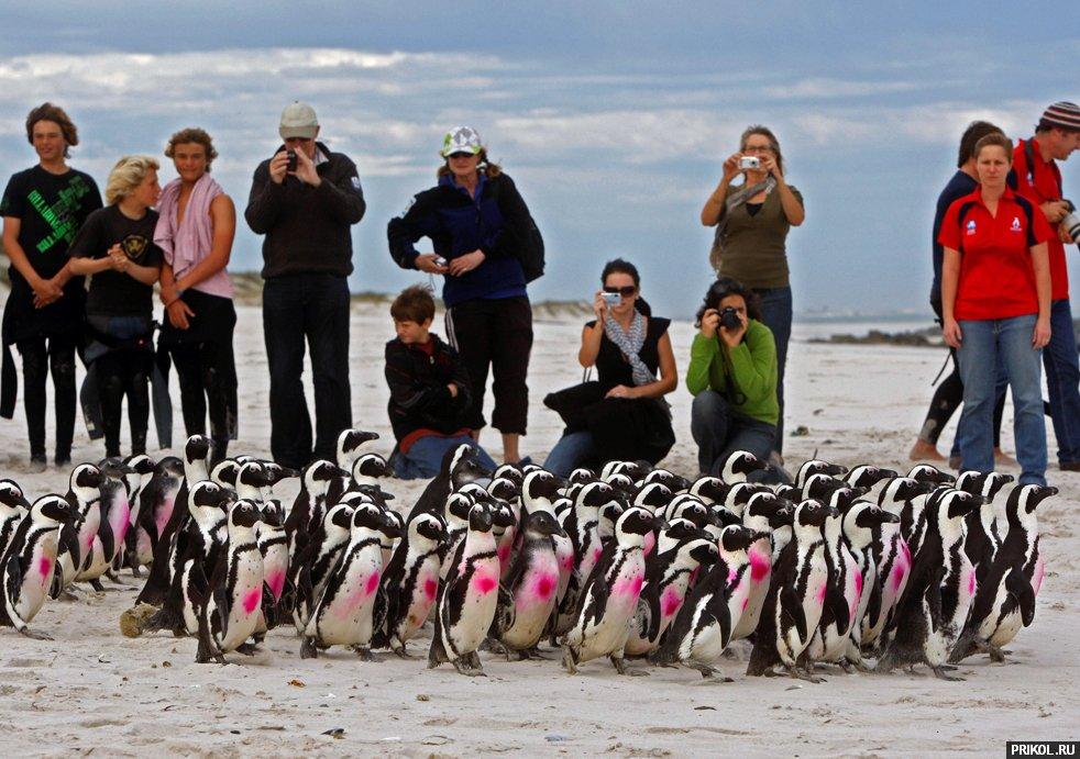 penguins-09