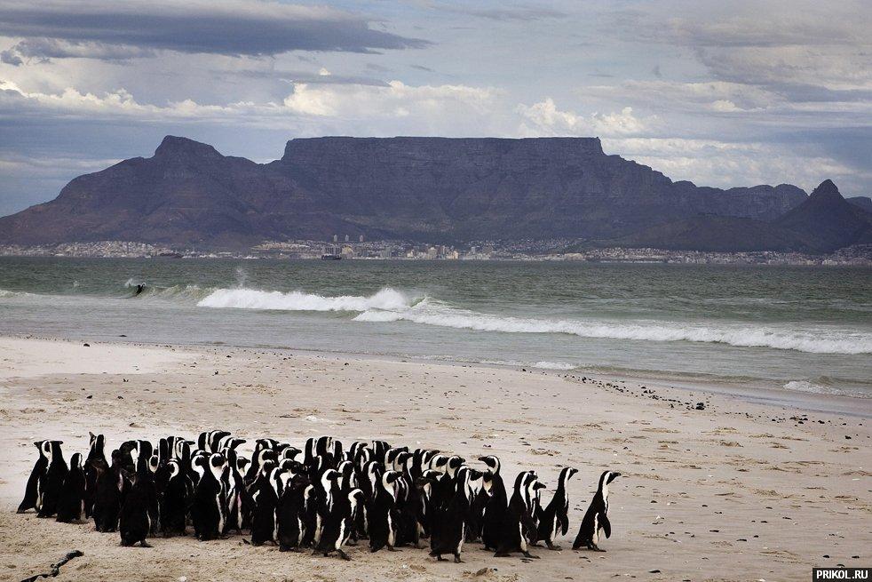 penguins-12