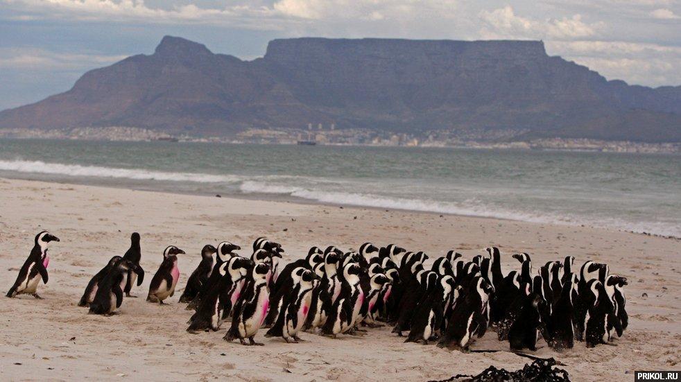 penguins-13