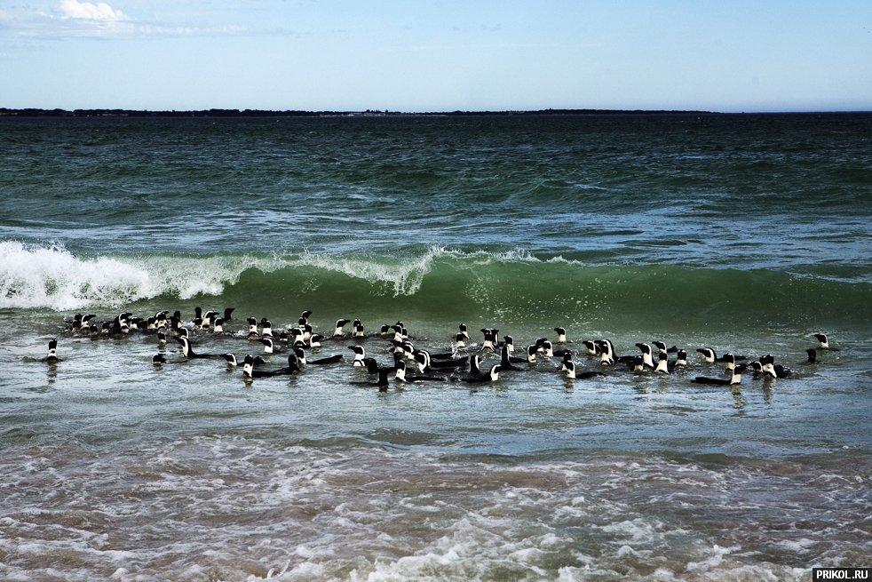 penguins-14