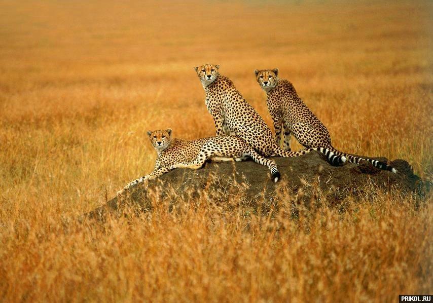 wild-cats-02