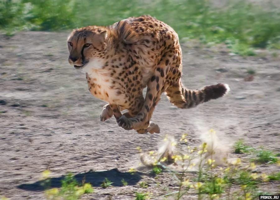 wild-cats-04
