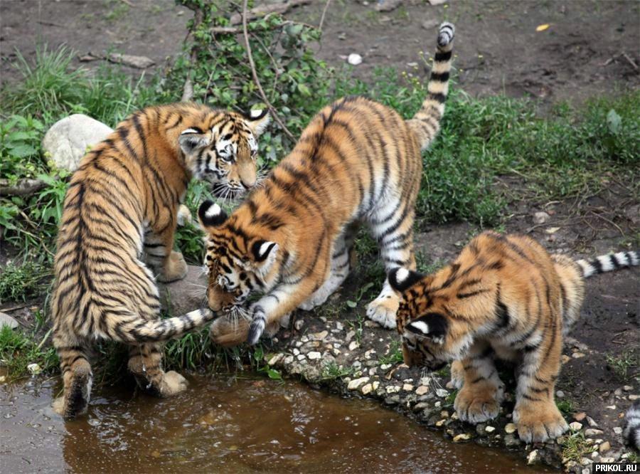 wild-cats-08