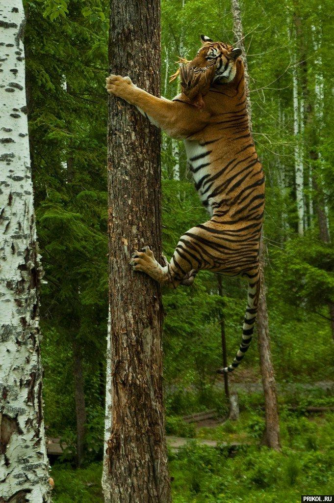 wild-cats-09