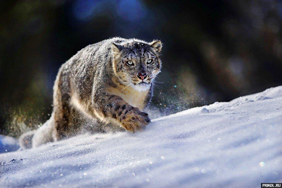 wild-cats-10