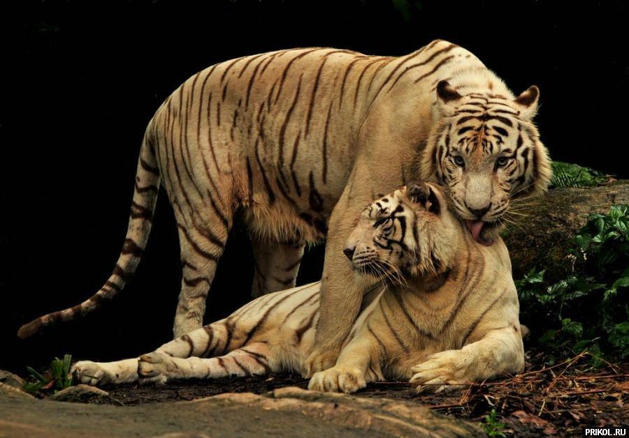 wild-cats-17