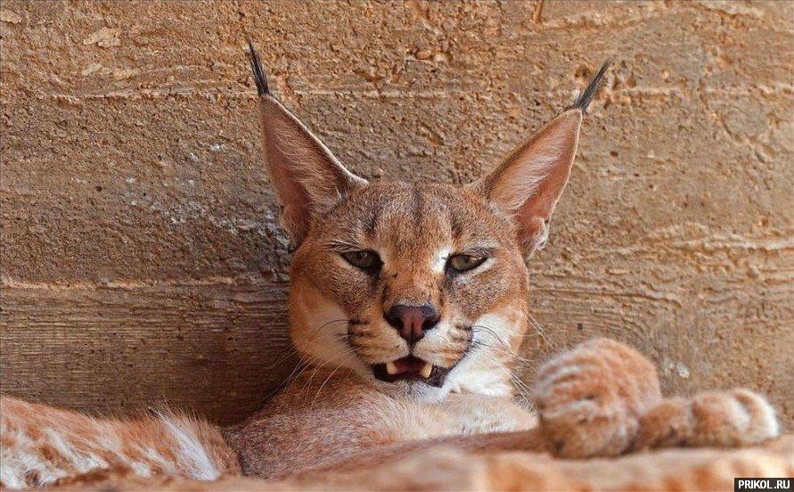 wild-cats-19
