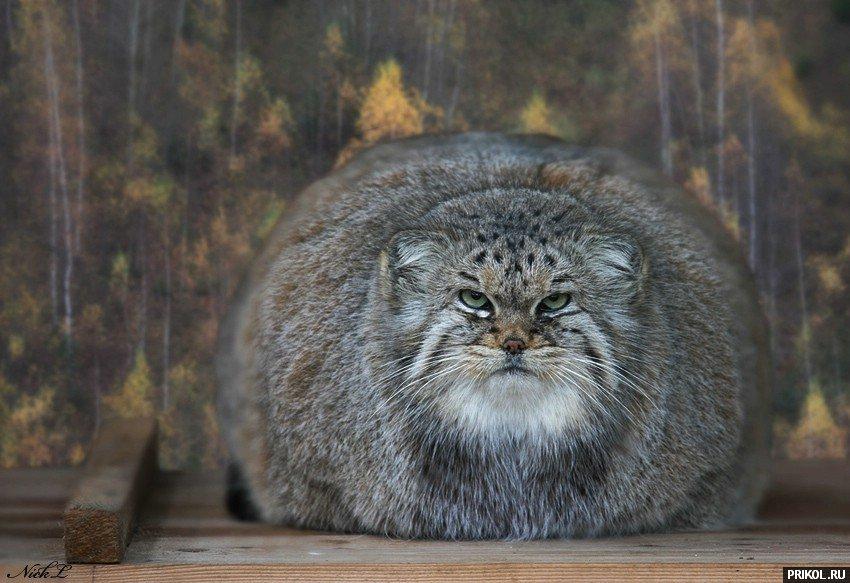 wild-cats-24