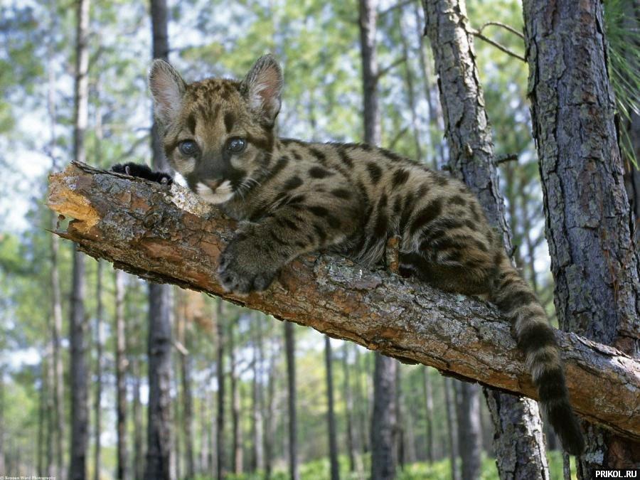 wild-cats-27